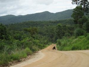 El sur de Myanmar, salvaje como la vida misma...