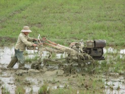 Vietnamese working